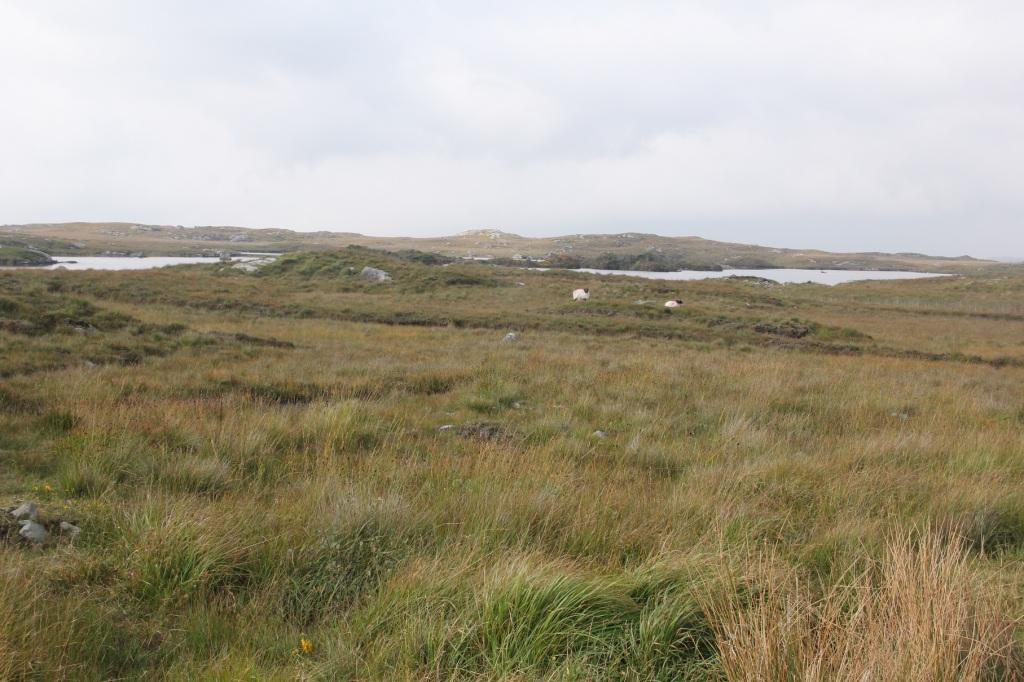 Bog Road von Roundstone nach Clifden